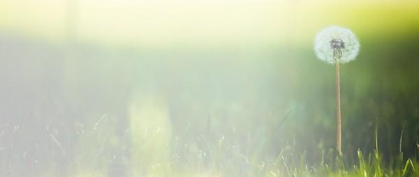 rasentraktoren-hintergrund01